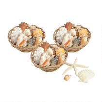 """6""""x3"""" Shell-Filled Baskets, Set of 3"""
